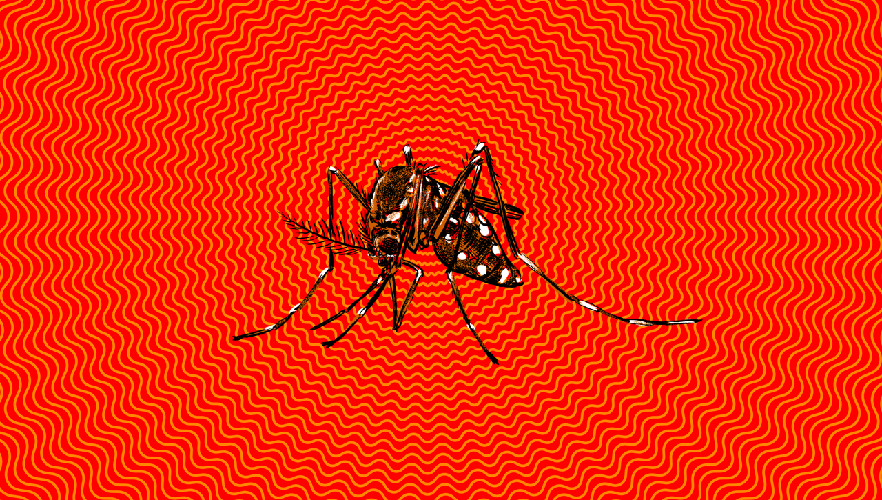 Yikes! 39 Confirmed Zika Virus Cases In Brooklyn, 223 In New York City