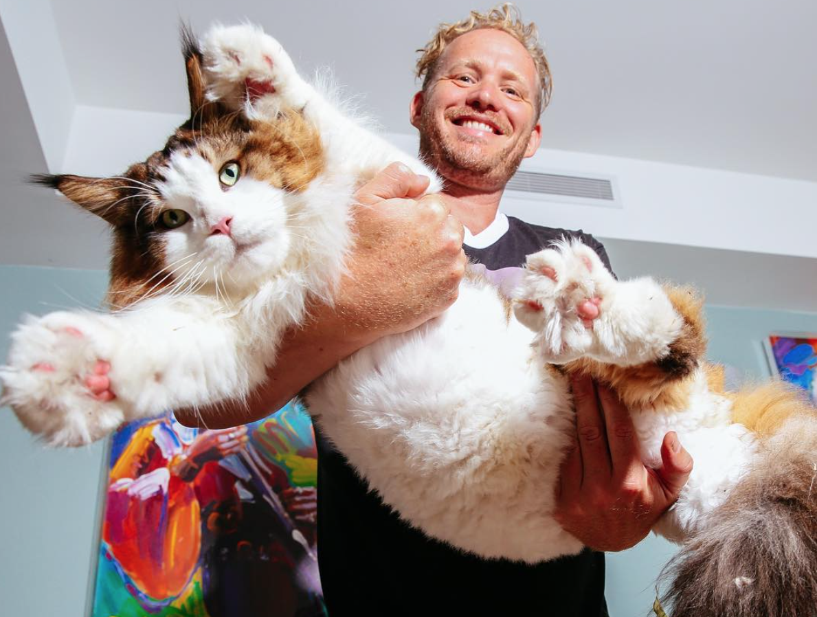 NYC's Biggest Cat Samson Is A 4-Foot, 28 Pound Brooklynite