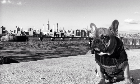 Williamsburg Couple Spends Over $150K To Save Their Dog's Life