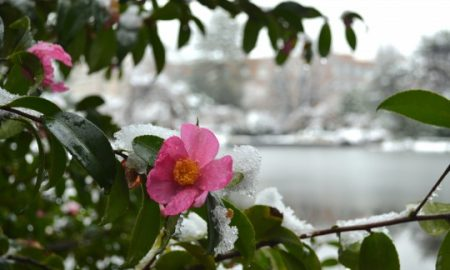 The Brooklyn Botanic Garden Winter Weekends Are Here!