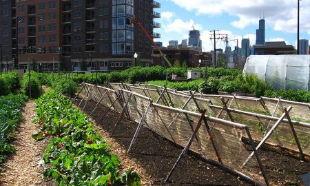 Square Roots Is Bringing the Real Food Revolution to Brooklyn