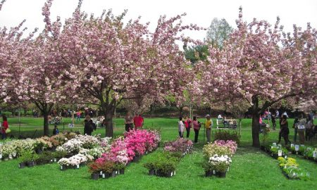 Brooklyn Botanic Garden's Annual Plant Sale Returns Next Month